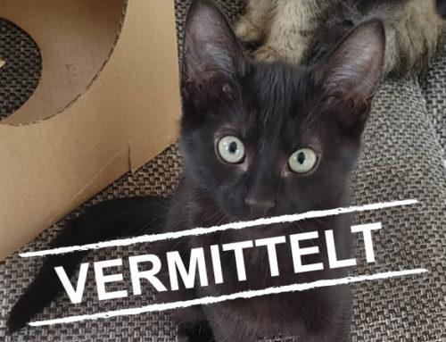 5 Katzenkinder suchen liebevolles Zuhause